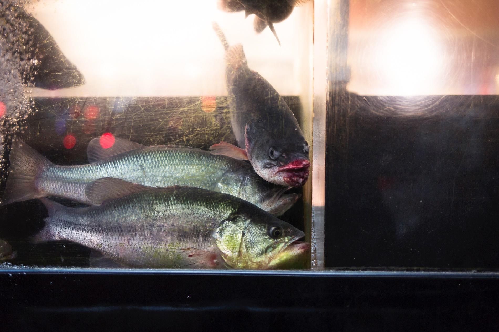 china town new york kitchen food fish